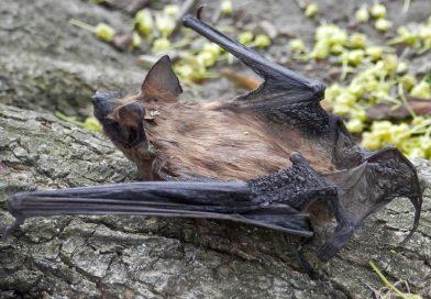 Expert: Don't Give Bats a Bad Rap